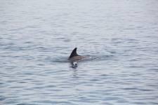 Delfine - Hurghada