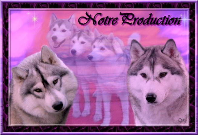 Nos productions - chiots husky