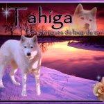 Tahigah