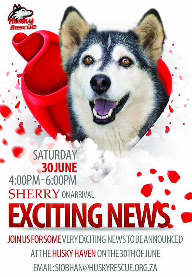 Exciting News - Husky Rescue South Africa