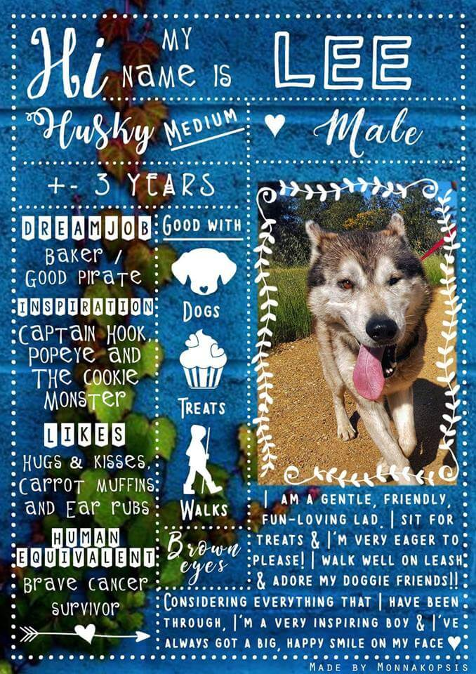 Adopt Lee Husky Rescue South Africa