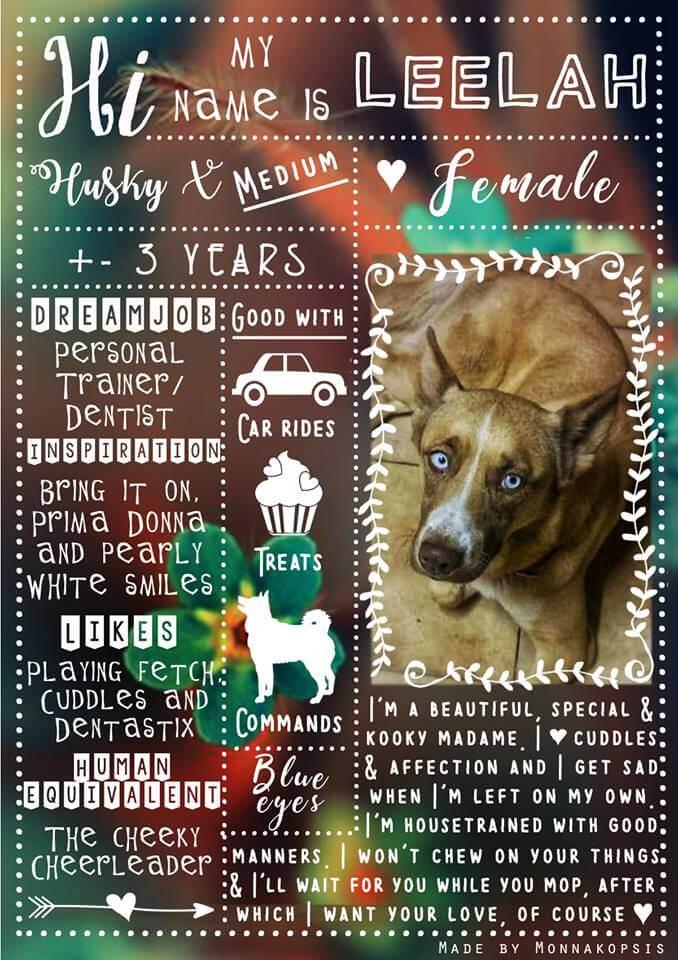 Adopt Leelah Husky Rescue South Africa
