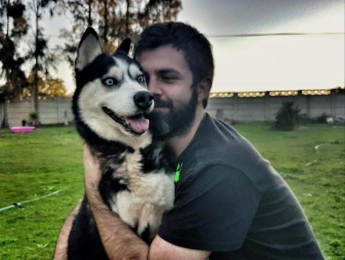 Adopt Bakari Husky Rescue South Africa