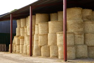 round bales in barn.jpg