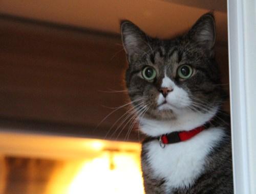 Katt i husvagn.