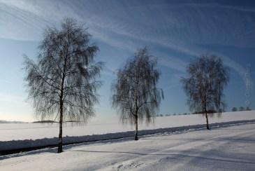 Drei Birken im Schnee