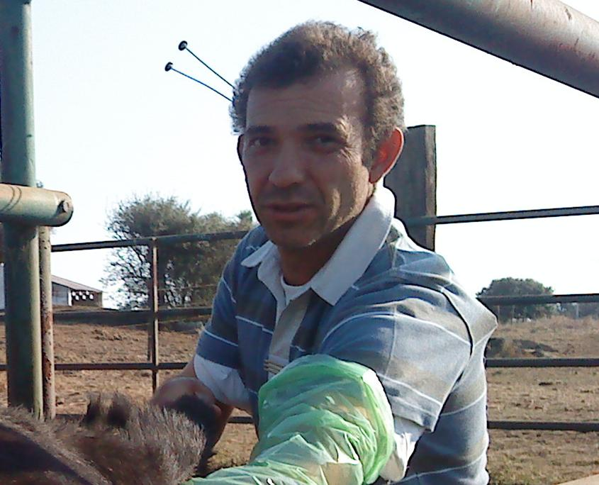 Pedro Bolas