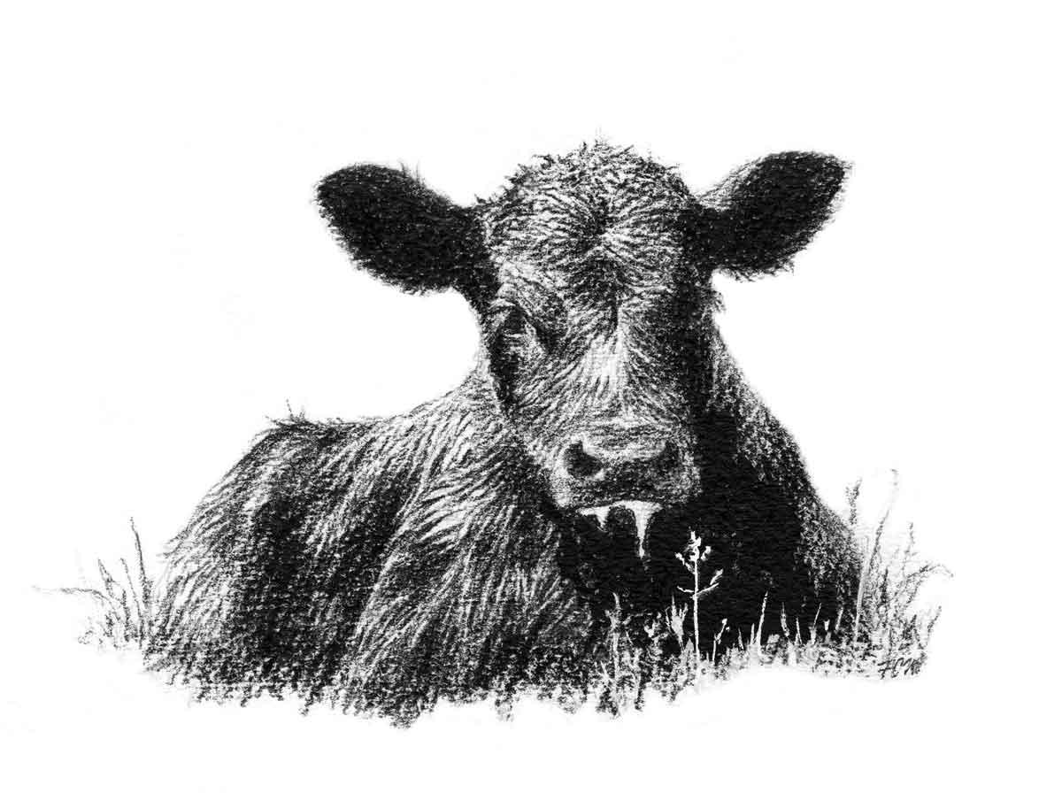 Cow Head Clipart