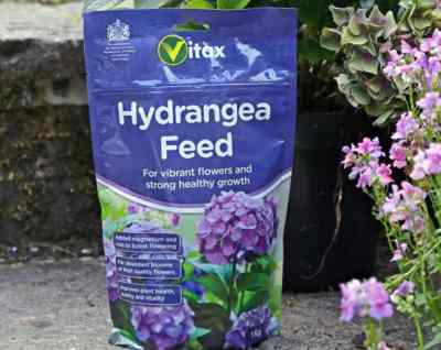In spring you can start to add hydrangea feed to your hydrangeas to give it the nutrients it needs for new growth. Sprinkle growmore on top of the soil and add some compost. Water everything immediately so that it has time to soak down to all of the roots.