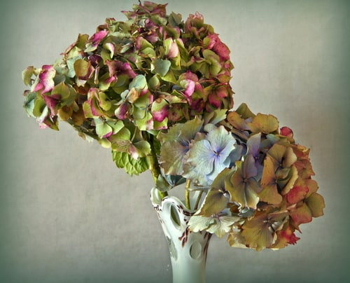 If you have hydrangeas you can always cut and store the dry flowers.