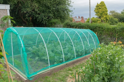 mini netted grow tunnel that protects plants from caterpillars