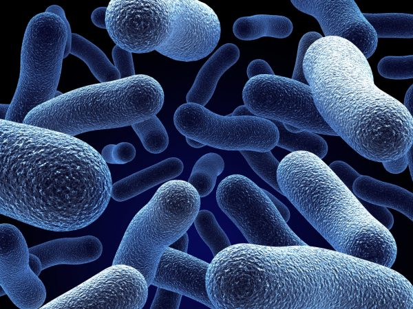 bacteria legionella tratamiento hydrocombus