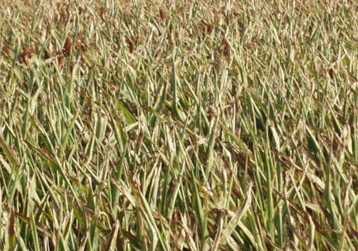 Drought may pummel U.S. energy markets