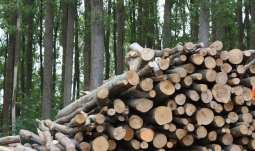 US Biomass Production - Wood - Trees