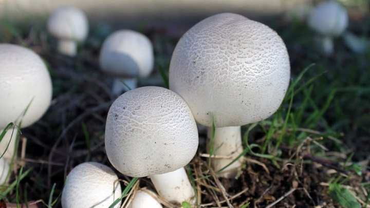 US researchers generate electricity using unique bionic mushroom