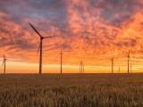 Alberta wind energy farm - wind turbines in wheat field