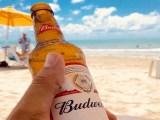 Budweiser solar farm - Budweiser beer - beech