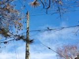 last mile electric grid problem