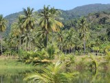 Tropical Forests - rain forest