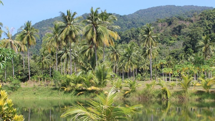 Tropical forests may absorb less greenhouse gas as climate change continues