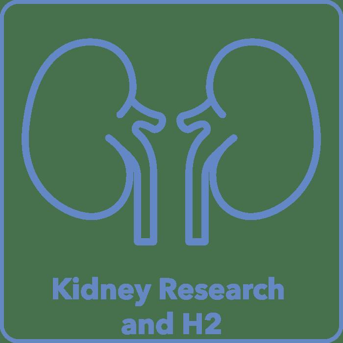 Kidney Studies