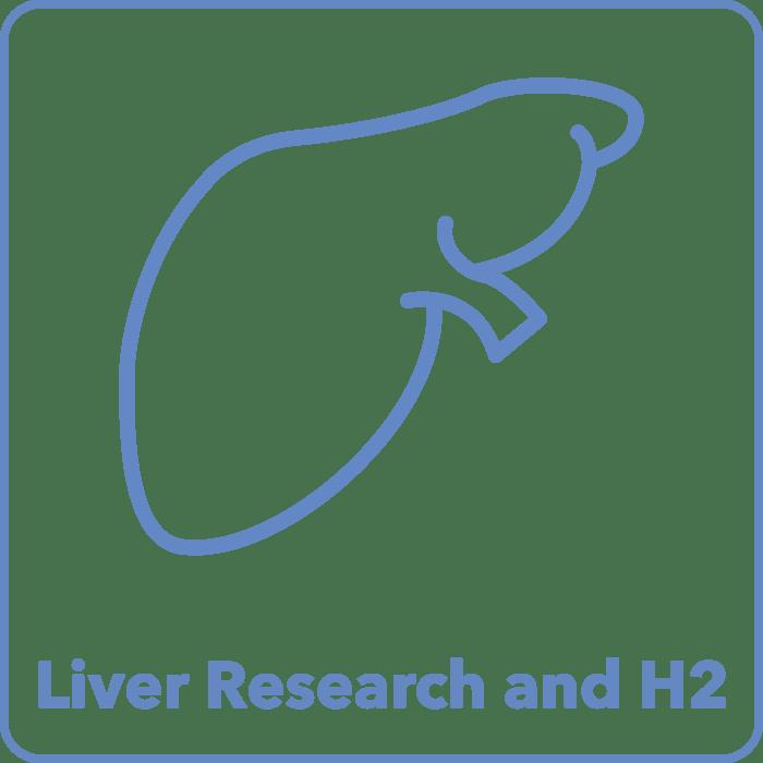Liver Studies