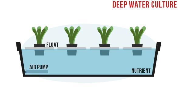 deep-water-culture-hydroponics