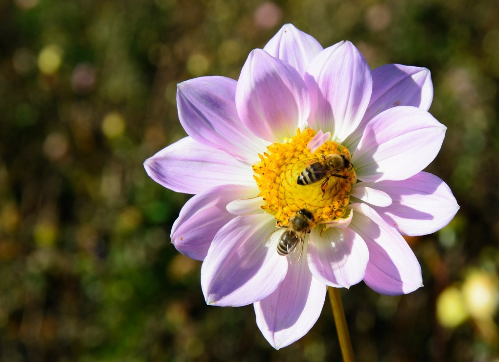 Insect-friendly plants and flowers in UK gardens this year.