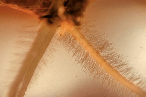 A plant with new root hairs