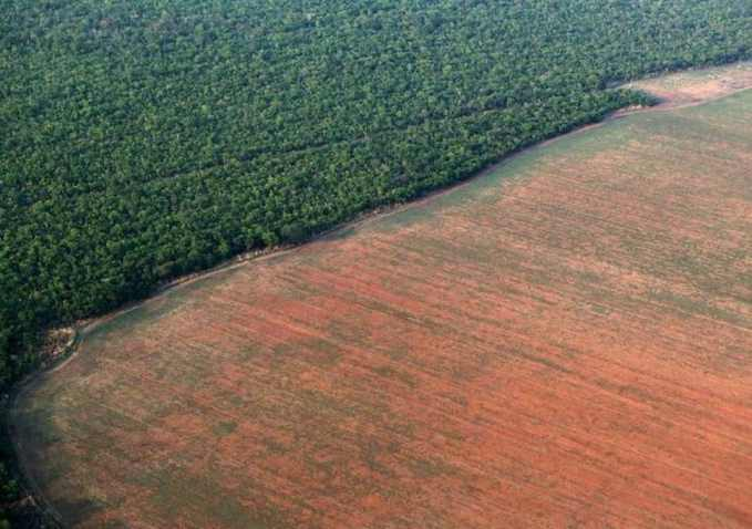 Brazil is Losing it's Rainforest Rapidly