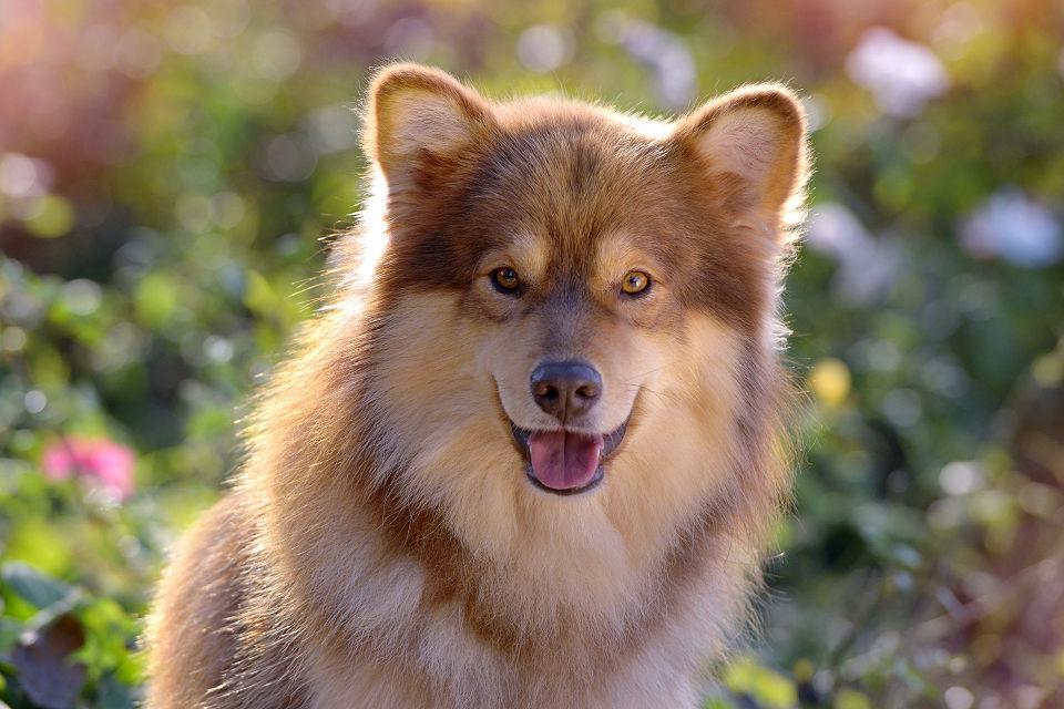 Hondenfotografie03