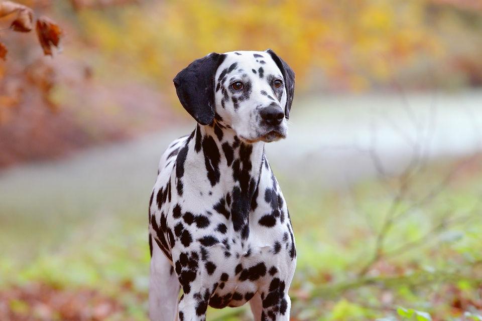 Hondenfotografie04