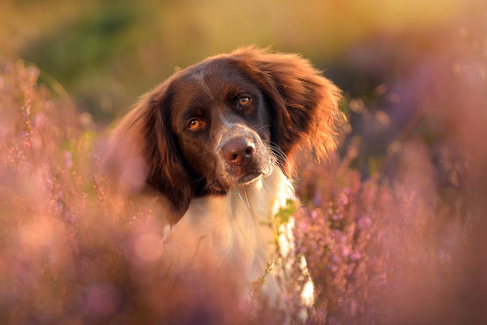 Hondenfotografie15