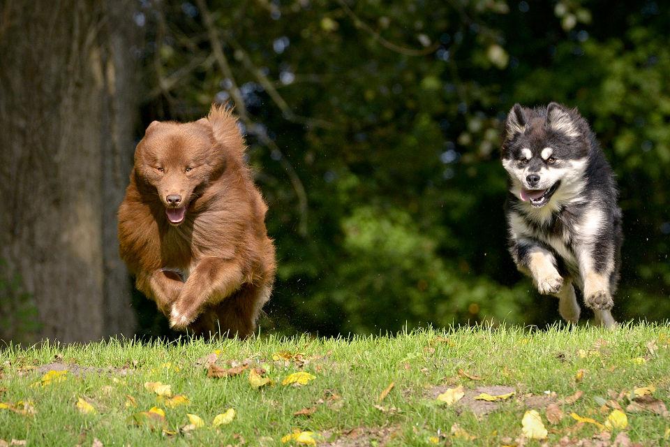 Hondenfotografie18