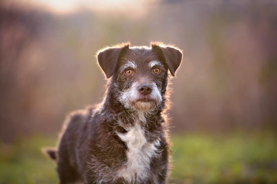 Hondenfotografie29