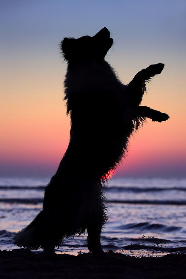 Hondenfotografie32