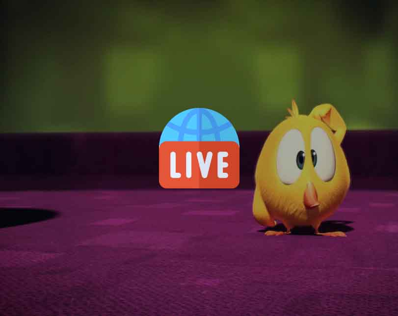 Where's Chicky Cartoon Live 24/7