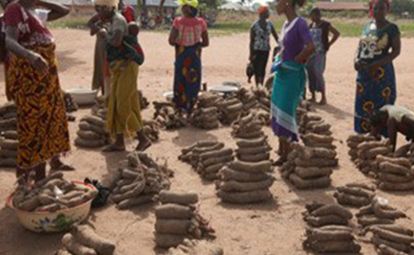 Price of yam up by 40% in Enugu State