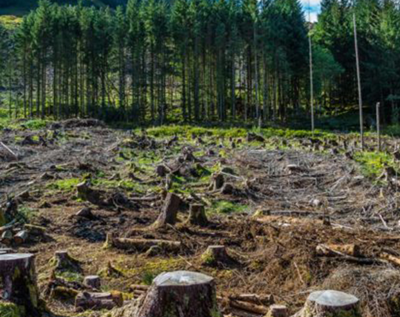 Gabon to be first African nation paid to fight deforestation