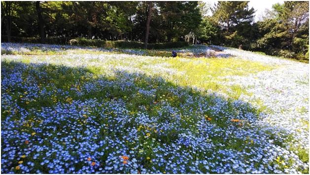 森の中の花  中程度の精度で自動的に生成された説明