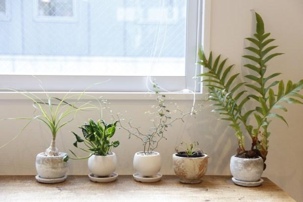 観葉植物を並べた部屋