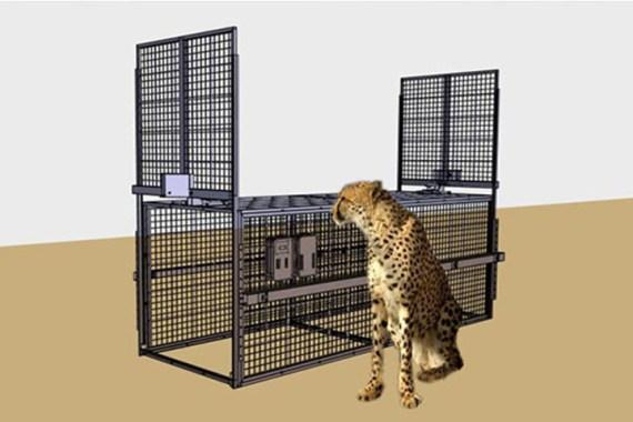 Simulation Gepard vor Falle