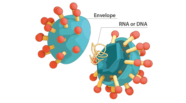 How is the COVID-19 virus detected using real time RT–PCR? | IAEA