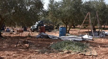 قساوة الظروف تدفع النساء شمال غرب سوريا للعمل في الزراعة بأجور زهيدة جدا