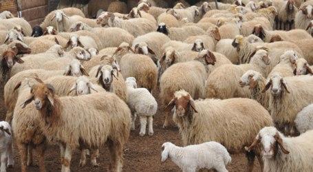 الثروة الحيوانية في سوريا تنخفض بنسبة 50%