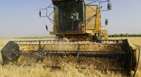السلطة السورية تفاجئ أصحاب الحصادات بقرار جديد في السويداء