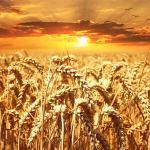 Should You Go Grain Free?