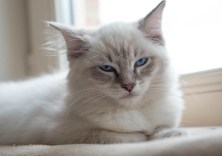 How to show your Love to your Cat by Slow Blinking - Video | IamCasper