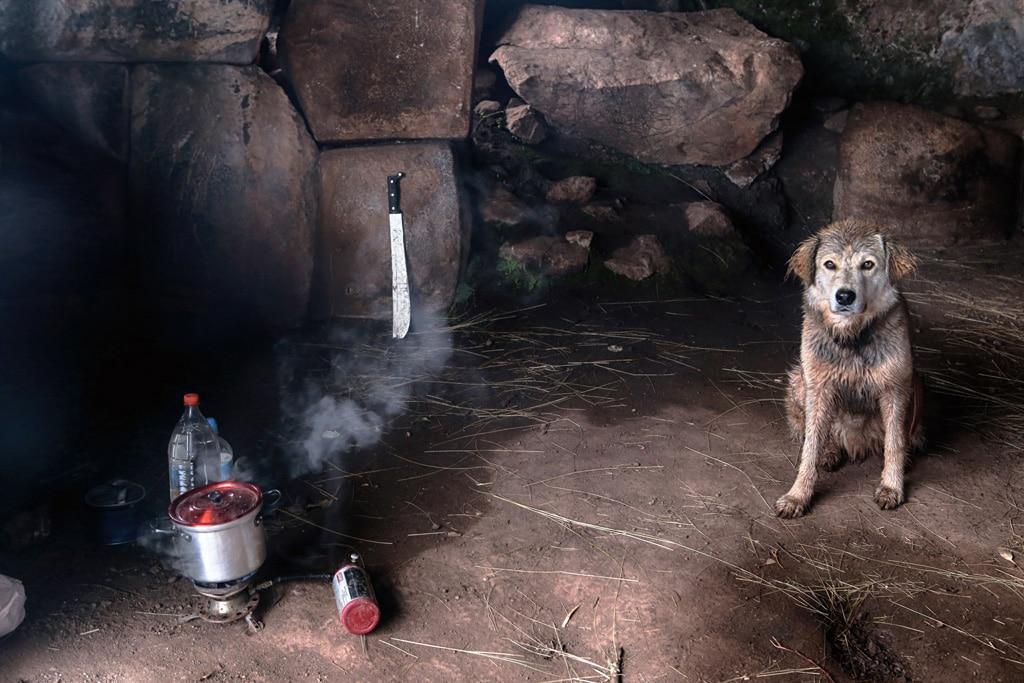 camp-cooking, dog