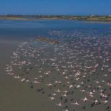 f-flamingo1